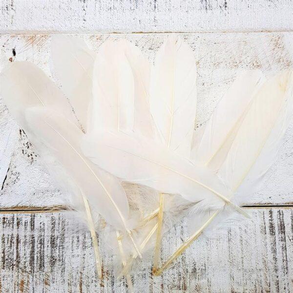Cream Goose Feathers