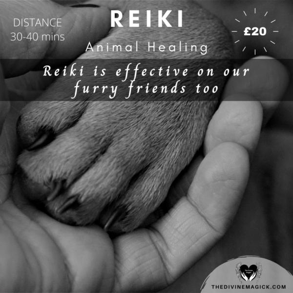 Animal Reiki Session - Distance (30-40 mins)